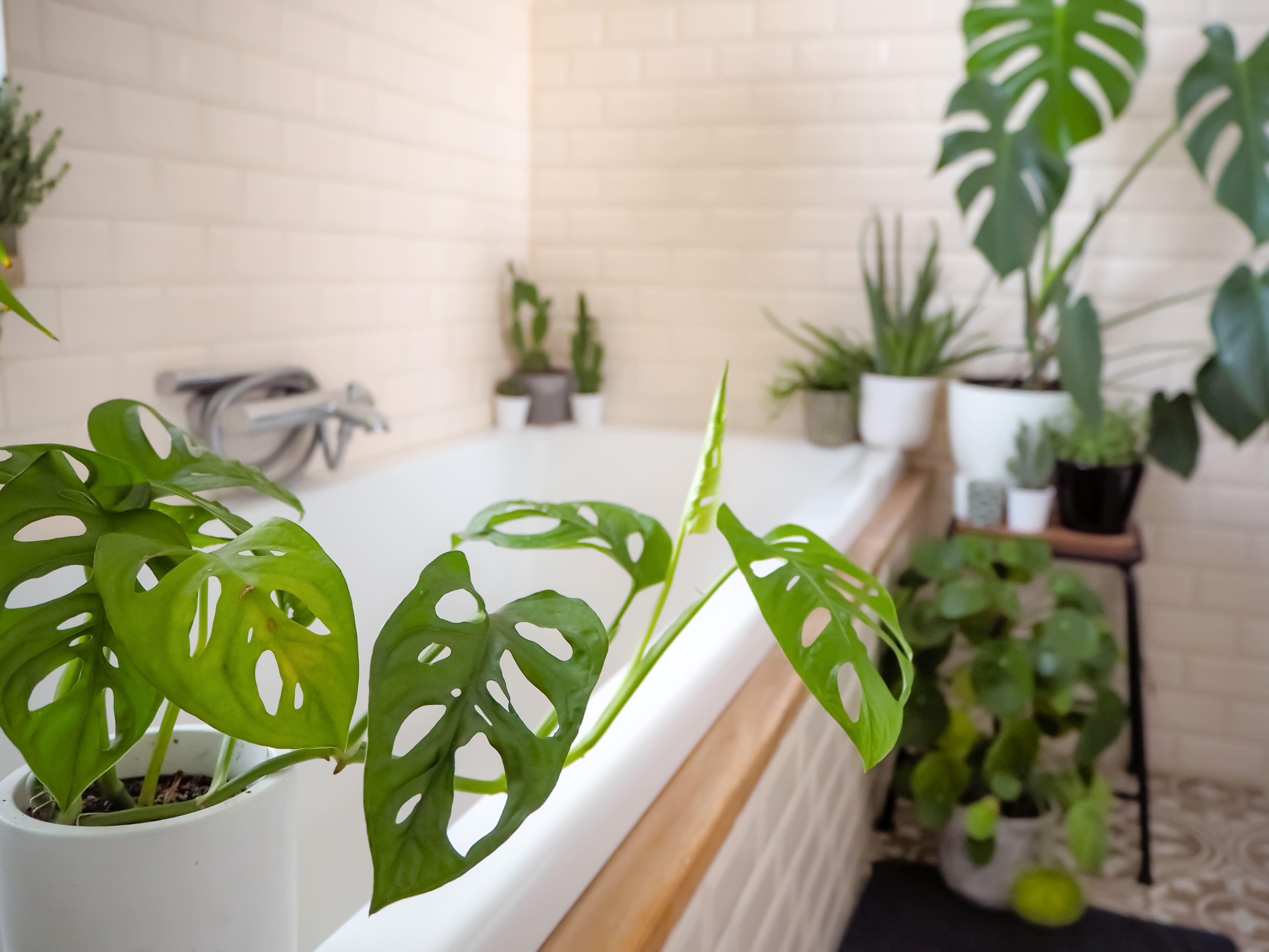 Accessori Bagno Da Appendere arredo bagno: bagno in stile urban jungle, dalle piante ai